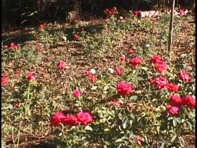 20160719150811-productor-de-flores-2-gtmo-2.m2p-20160719-085339.675.jpg