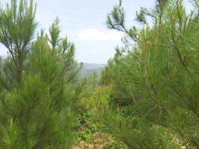 20170701133450-areas-forestales-recuperadas-en-baracoa-ntv.m2p-20170701-072904.343.jpg